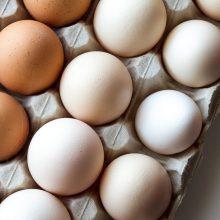 Iš tvenkinio pavogtos žuvys, iš namo – vištų kiaušiniai