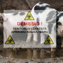 Ekspertai vertina, kaip Lietuva naudoja ES lėšas kovai su kiaulių maru