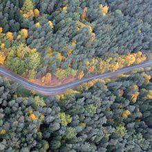 Miškininkai rengiasi naikinti miškagraužius – bus purškiami 2, 5 tūkst. ha plotai