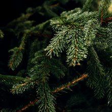 Ką žinoti, kad namuosе Kalėdų eglutė džiugintų kuo ilgiau?