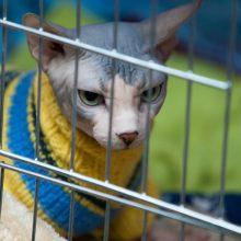Keliaujant su gyvūnais ar siunčiant juos į užsienį, reikia laikytis reikalavimų