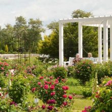 VDU Botanikos sode – atrakcija aktyviems senjorams