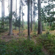 Specialistai: dėl sausros miškuose itin didelis gaisro pavojus
