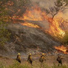 Kalifornijos miškų gaisruose žuvo ugniagesys