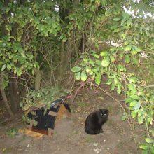 Saliamoniškas sprendimas: namelį katėms įrengė ne prie daugiabučio, o ant šlaito