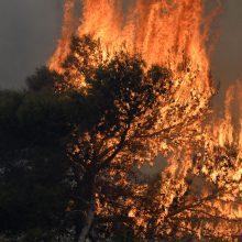 Libane plintant miškų gaisrams, šalis prašo tarptautinės pagalbos