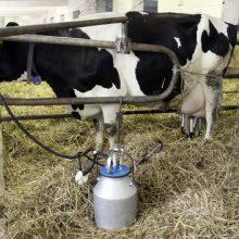 Nuo trečiadienio – nacionalinė parama pieno gamintojams