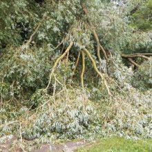 Birštone nukritusi medžio šaka mirtinai sužalojo moterį