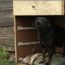 Kretingos rajone vyras žiauriai nužudė du šunis