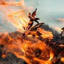 Miškininkai perspėja – ugnis iš pievų netrunka persimesti į miškus