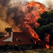 Pražūtingi gaisrai Graikijoje: žuvusiųjų skaičius išaugo iki 74