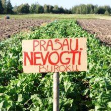 Nepalankios sąlygos kitąmet toliau mažins daržovių plotus