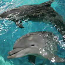 Kryme užsiliepsnojus delfinariumui evakuoti du delfinai