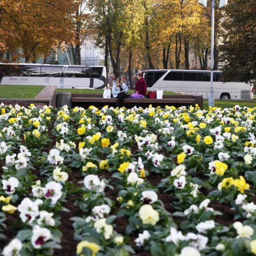 Uostamiesčiui – tūkstančiai rudeninių žiedų  © Vytauto Liaudanskio nuotr.