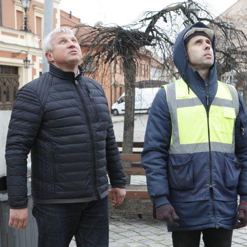 Pradėta montuoti Klaipėdos eglutė  © Vytauto Liaudanskio nuotr.