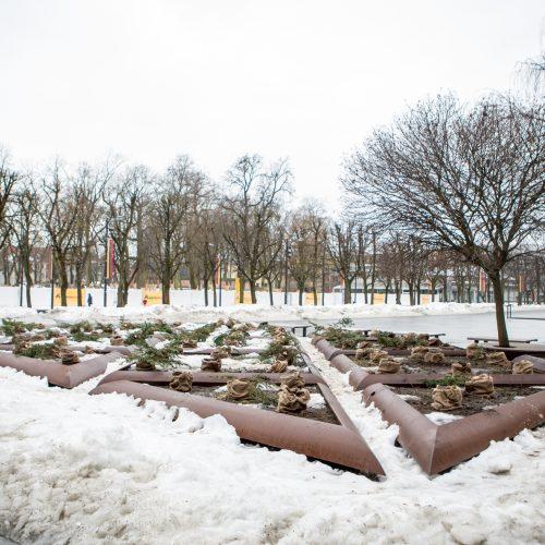 Nukapotos eglutės prie Kauno miesto savivaldybės  © Vilmanto Raupelio nuotr.