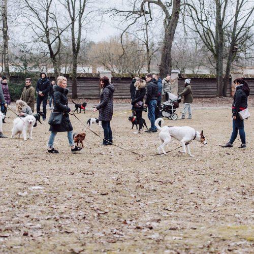 """Šunų susitikimas prie Pažaislio vienuolyno  © """"Charizma photography"""" nuotr."""