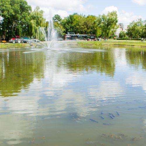 Į Kalniečių parko tvenkinį įleistos žuvys  © Laimio Steponavičiaus nuotr.