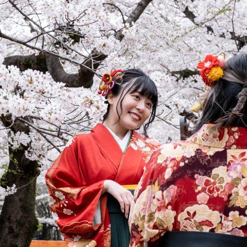 Japonijoje žydi sakuros