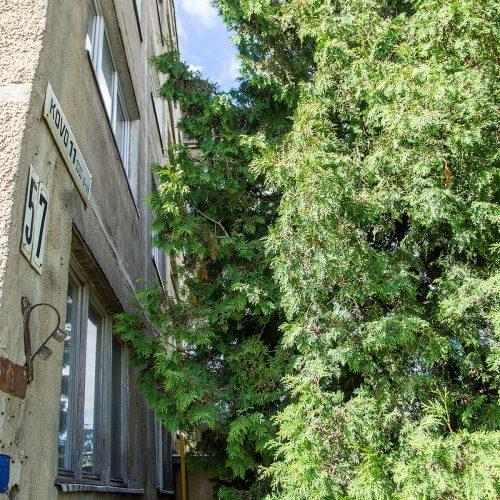 Medžiai, užstojantys daugiabučių langus  © Evaldo Šemioto nuotr.