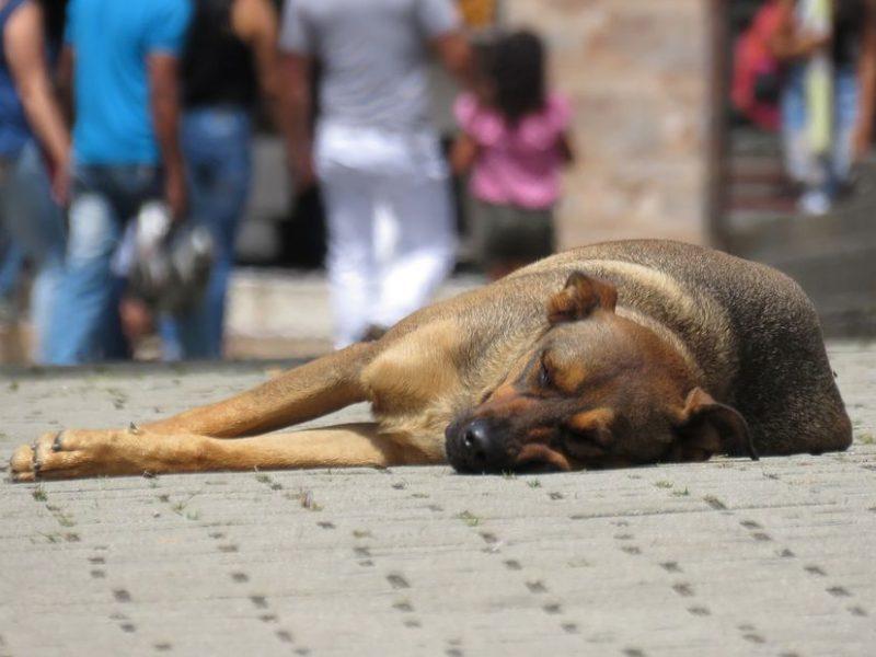 Graikijoje už žiaurų elgesį su gyvūnais grės iki 10 metų kalėjimo