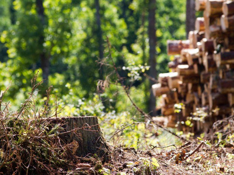 Seimas imasi prezidento veto dėl miško žemės pirkimo