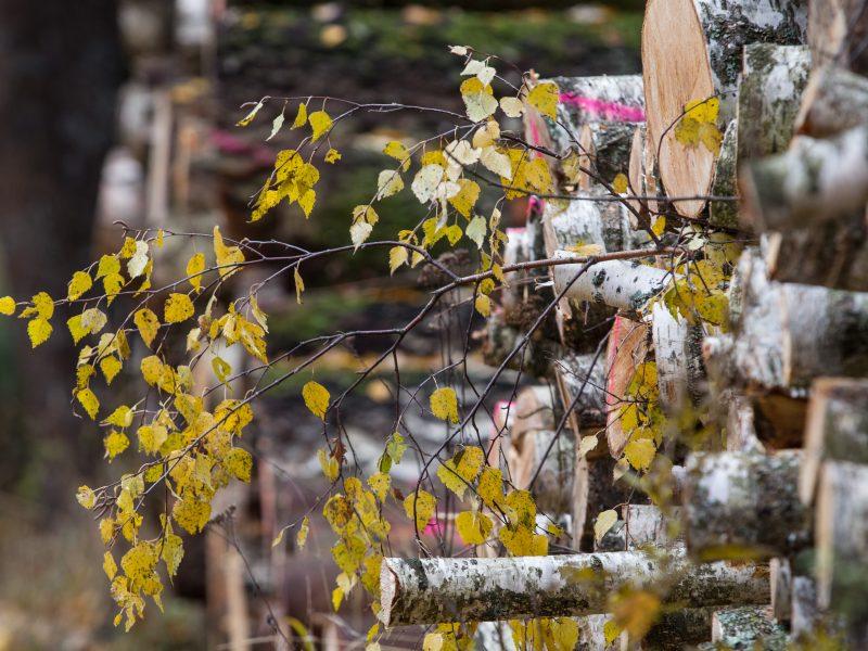 K. Navickas: norime labiau subalansuoti miškų politiką