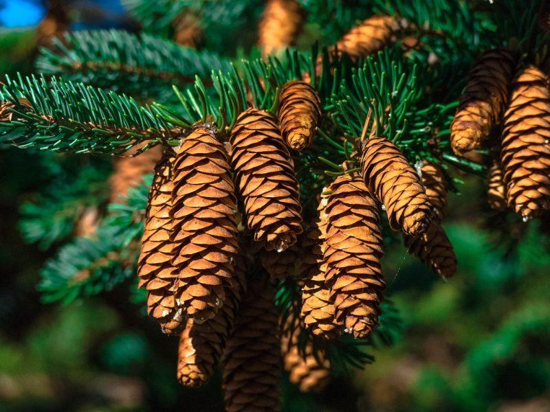 Orai: metams baigiantis dienos primins rudenį – šėls vėjas, bus žvarbu