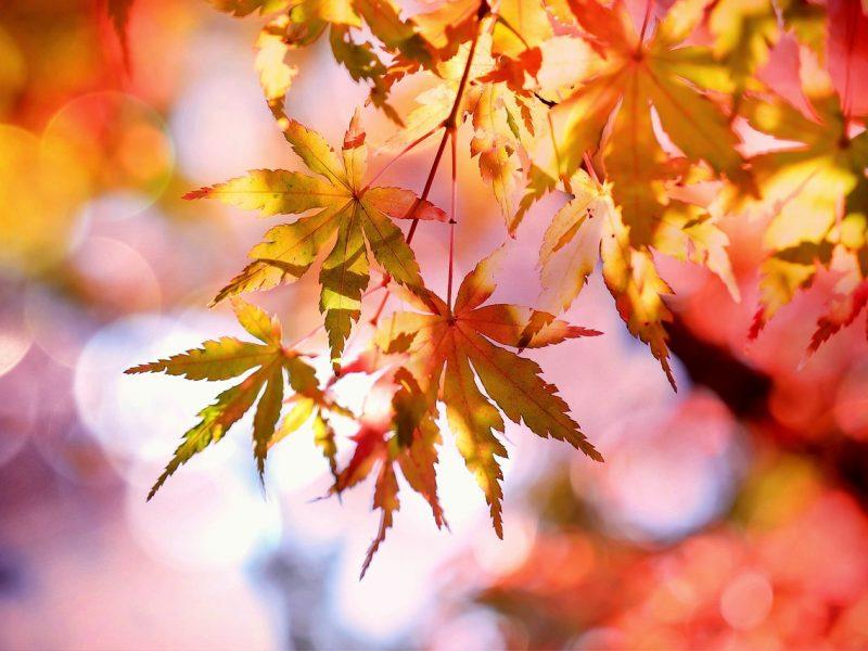 Orai: lapkritis lepins ir toliau – šiluma nesitrauks