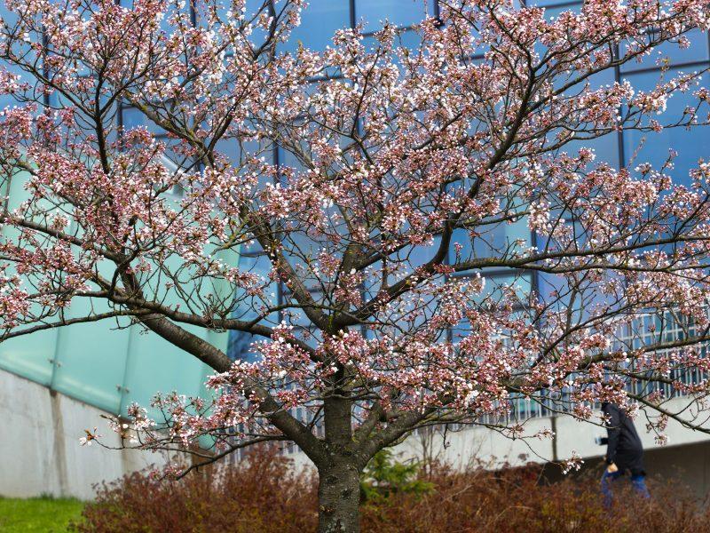 Sinoptikai turi gerų žinių išsiilgusiems šilumos: savaitės pradžia bus vasariška