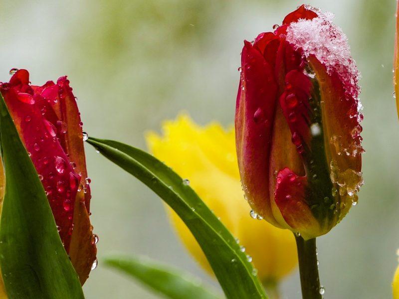 Orai: lietus jau baigėsi, o šalnos dar nesitraukia