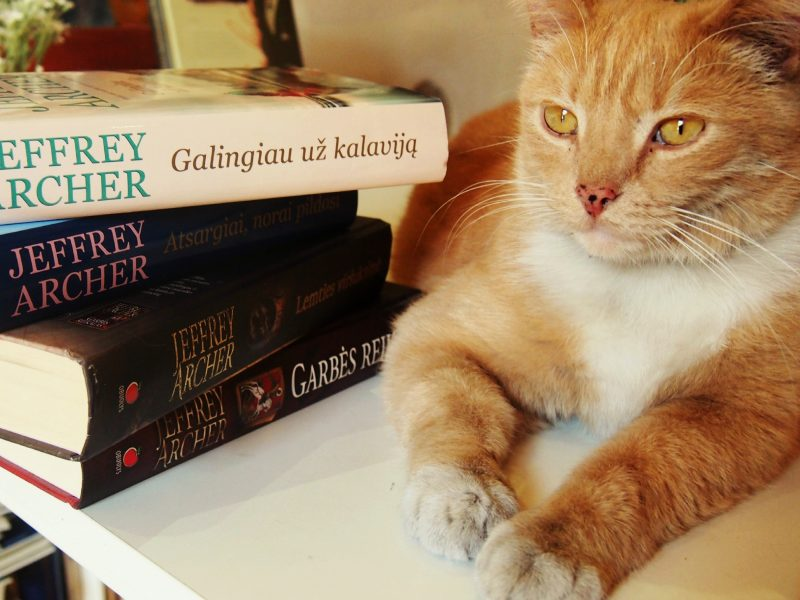 Gyva Užupio legenda – katinas, įsikūręs knygyne