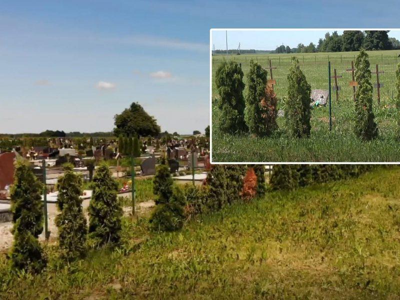 Iš Vainatrakio kapinių pavogta daugiau nei pusšimtis tujų: nuostoliai – tūkstantiniai
