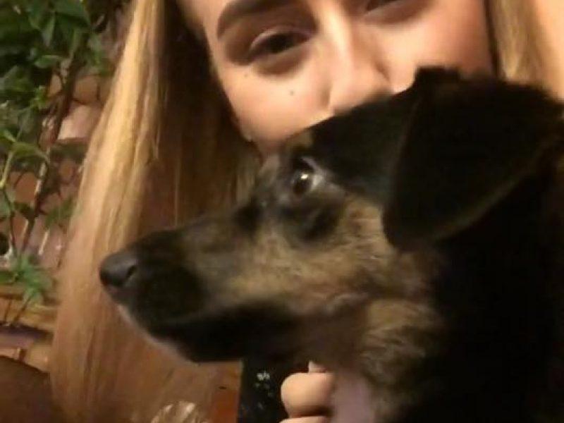 Pabėgusių šunų bumas: Šilainiuose dingo sterilizuota kalytė