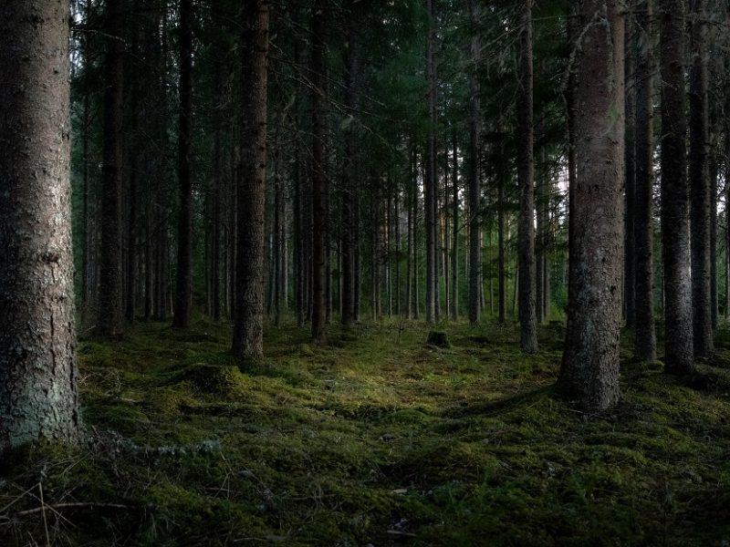 Šiandien – paskutinė diena išreikšti nuomonę apklausoje dėl Girulių miško