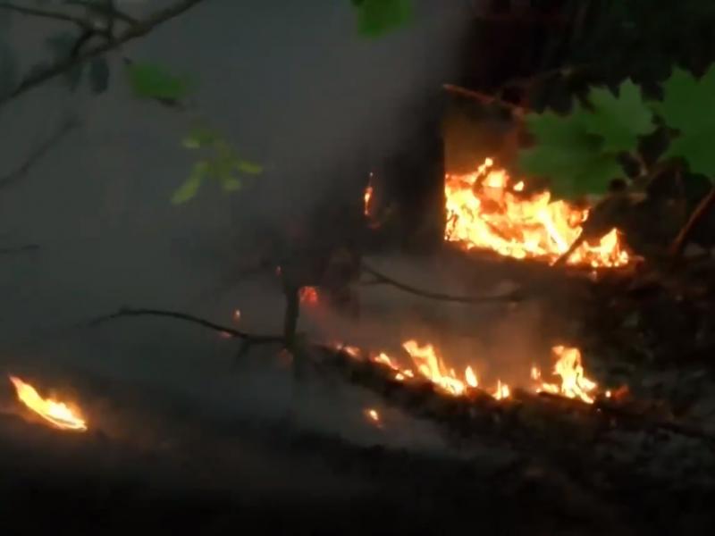 Vilniuje degė draustinis: ugnį vyras malšino tuo, kas pasitaikė po ranka