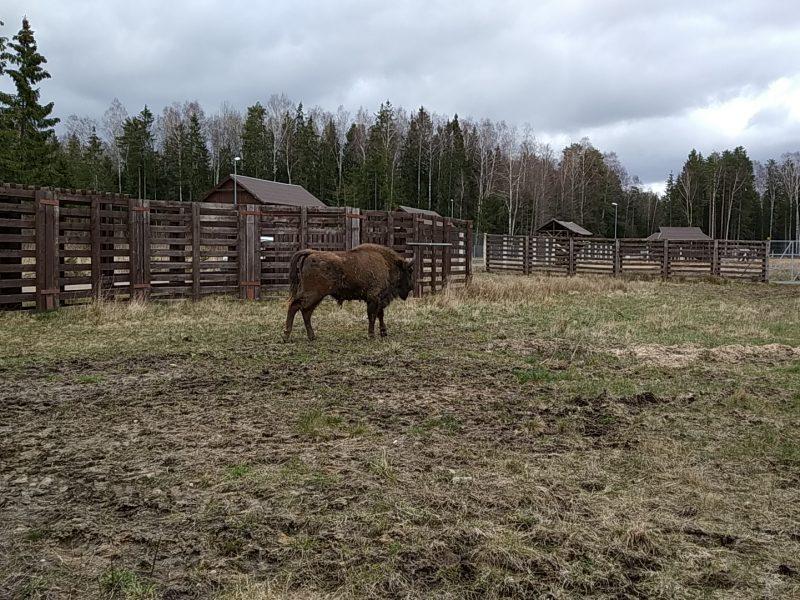 Į Žvėrinčių atkeliavo naujas gyventojas – beveik dviejų metų stumbriukas