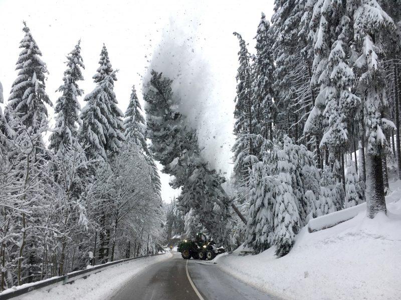 Žiemos padariniai Vokietijoje: ant kelio virtęs medis užmušė berniuką