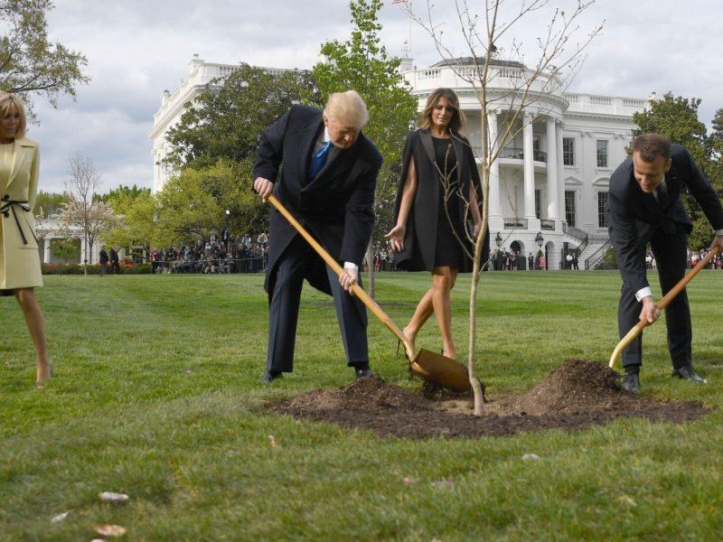 E. Macronas išsiųs D. Trumpui naują ąžuoliuką, nunykus jų pasodintam medeliui