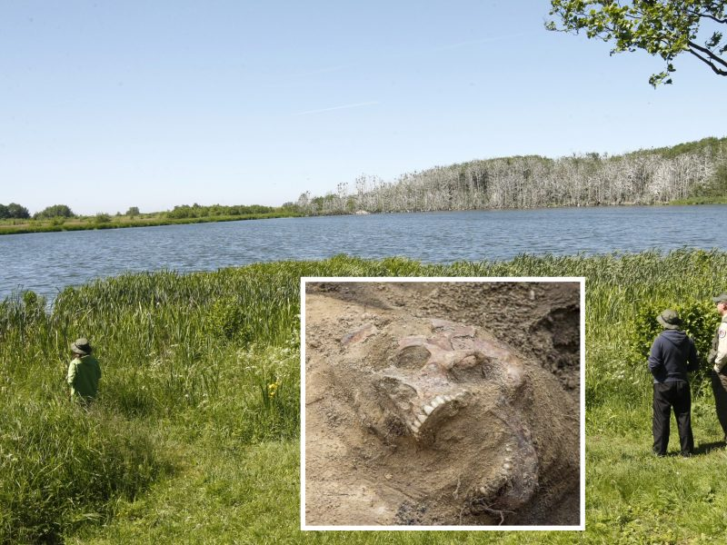 Latvės palaikų istorija: pajūrio miške rasti žmogaus kaulai atskleis šiurpią tiesą?