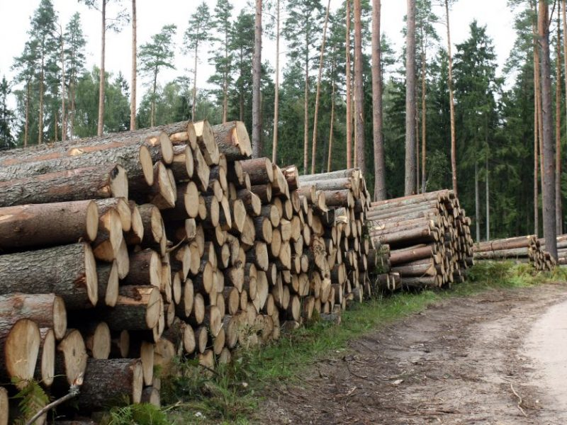 Seime skinasi kelią miško žemės įsigijimo ribojimai