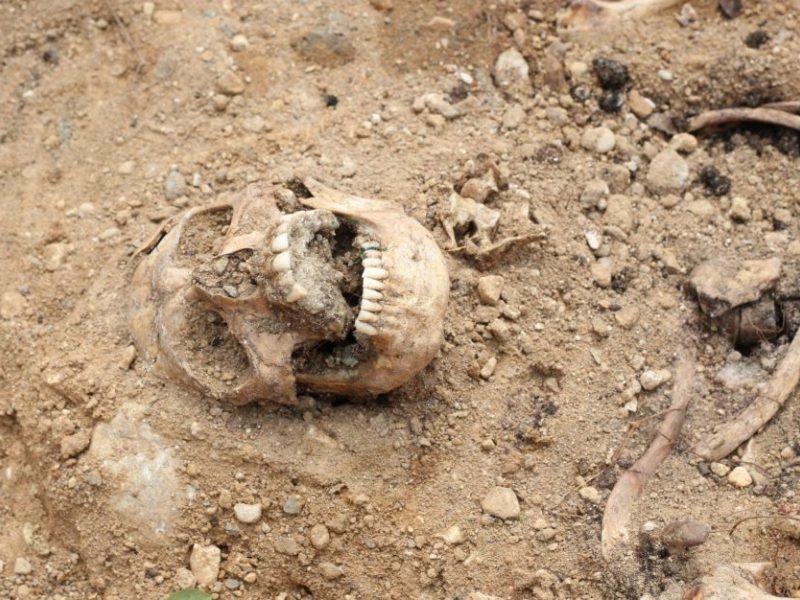 Vilniaus rajone rasti, kaip manoma, dviejų žmonių kaulai