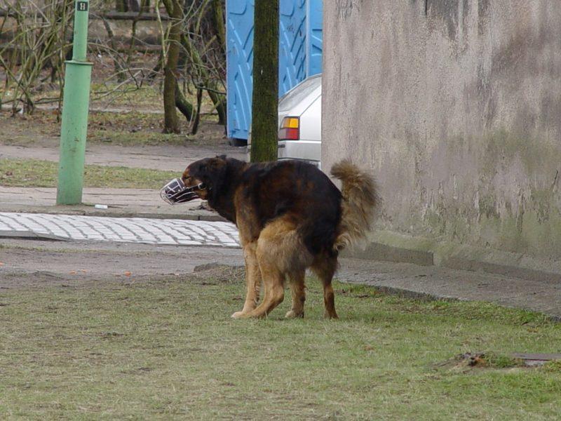 Uostamiestyje už gyvūnų šėrimą atsiperkama baudomis