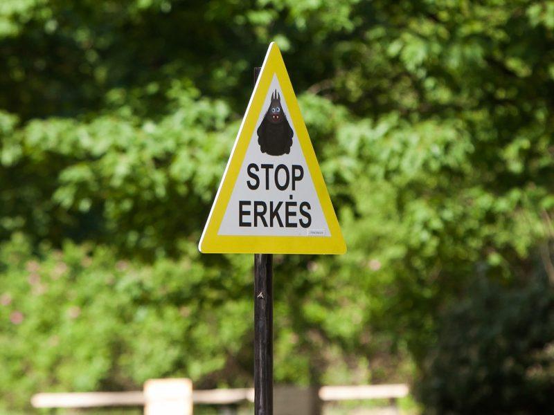 Įspėjimas: šiemet Lietuvoje erkiniu encefalitu užsikrėtė jau septyni asmenys