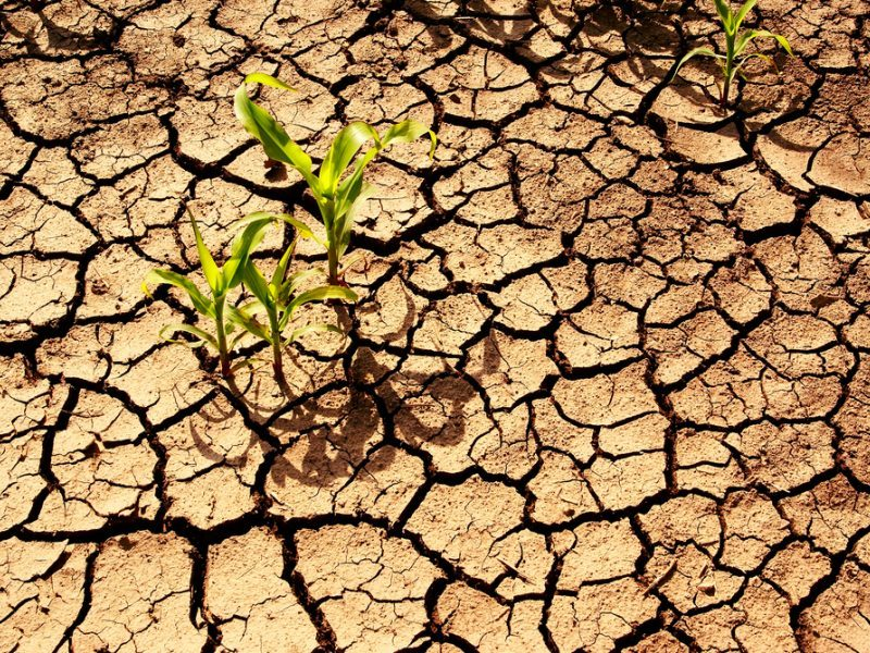 Įvardino stipriausią ginklą prieš klimato kaitą: tai ne vegetarizmas ar vėjo jėgainės