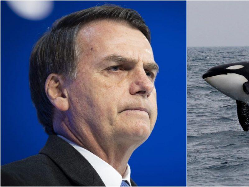 Brazilija patyrė fiasko: nepagrįstai apkaltino Norvegiją banginių medžiokle