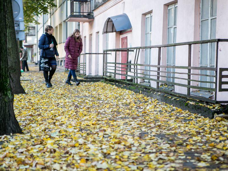Rudeniniai lapai nuklojo Kauną