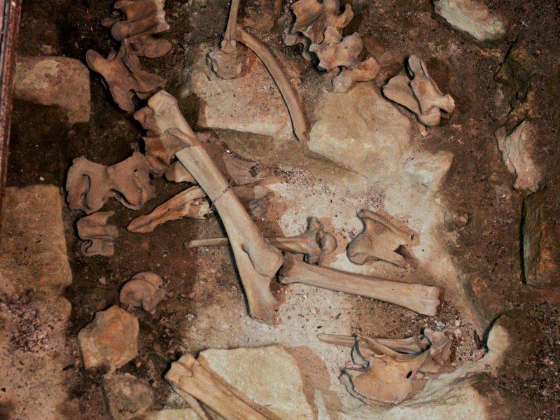 Karmėlavos detektyvas: kas išpylė bažnyčios šventoriuje kaulus?