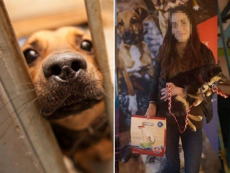Padovanojus šuniuką užvirė tikras pragaras: mergina grasino padegti prieglaudą?