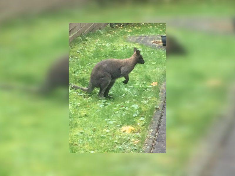 Vilniuje pastebėtas neįprastas gyvūnas